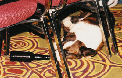 Under-a-chair-at-the-AGM