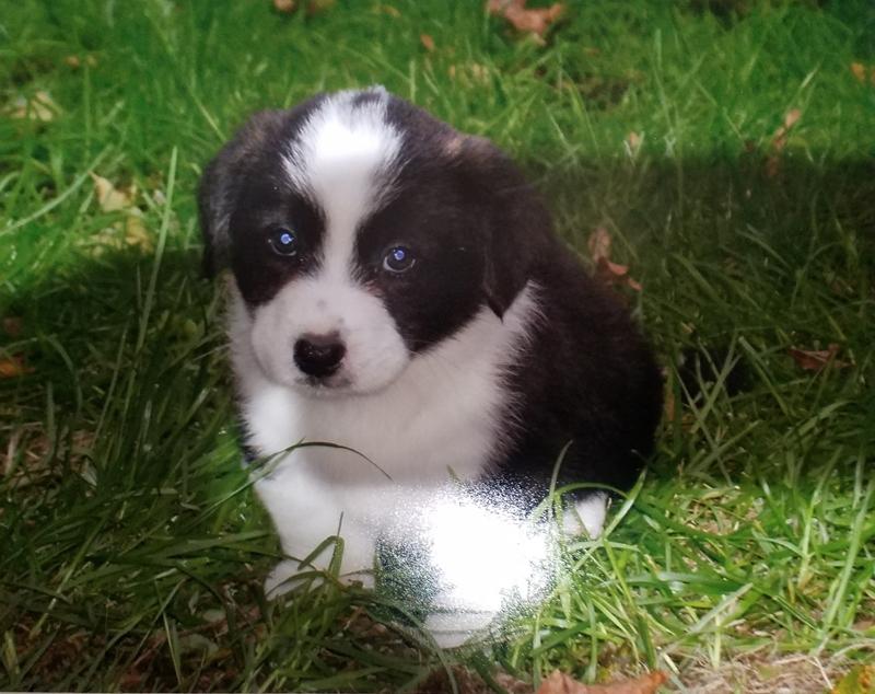 Puppy 1st place Deborah Frank