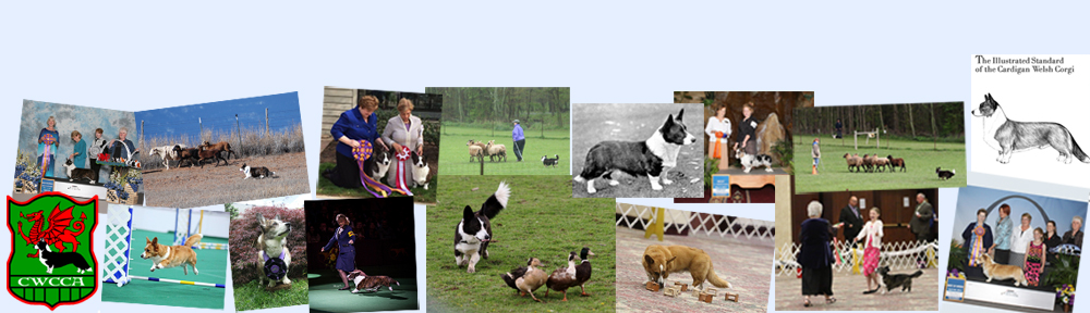 Cardigan Welsh Corgi Club of America