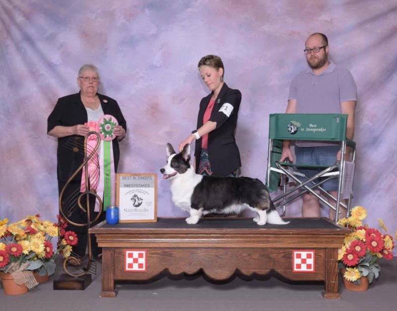 CWCCA 77th Annual National Specialty – Cardigan Welsh Corgi Club of