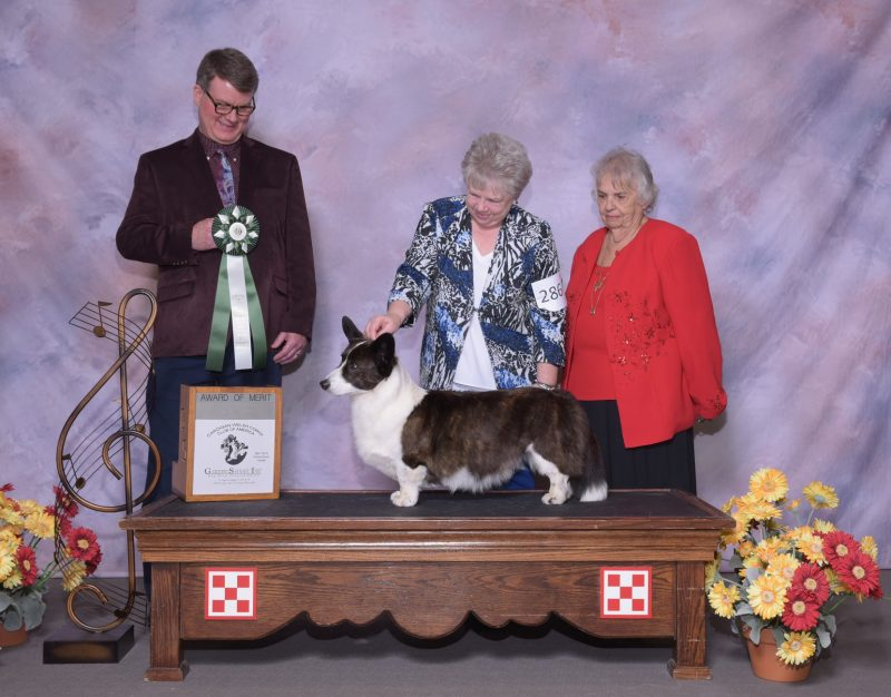 CWCCA 77th Annual National Specialty – Cardigan Welsh Corgi