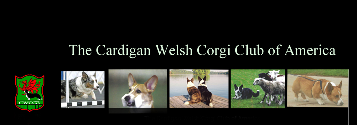The Cardigan Welsh Corgi Club of America